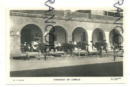 Soudan. Firewood On Camels. Transport De Bois De Chauffage  Par Chameaux - Sudan