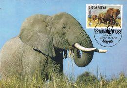 36842. Tarjeta Maxima KAMPALA (Uganda) 1983. ELEPHANT, Elefante - Ouganda (1962-...)