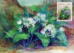 Lithuania - 2019 - Red Book Of Lithuania - Plants - Wild Garlic - Allium Ursinum - Maximum Card - Lituania