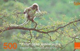 Thailand - Orange - Monkey - Thailand