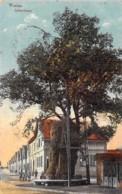 ARBRE Tree Bome ( Deutschland Allemagne ) WORMS Lutherbaum Arbre De Luther - Jolie CPA Colorisée - Boom Albero árbol - Árboles