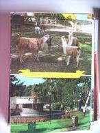 Nederland Holland Pays Bas Norg Met Dierenpark De Vluchtheuvel Zoo - Norg