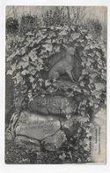 (RECTO / VERSO) ASNIERES EN 1907 - N° 10 - CIMETIERE DES CHIENS - BEAU CACHET - CPA VOYAGEE - Asnieres Sur Seine
