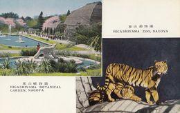 Japan Nagoya Higashiyama Zoo & Botanical Garden Old Postcard Tiger Bear - Nagoya