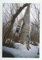 Killed Wild Cat Za197-360 - Photos