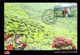 30R: CM,Carte Maximum Card, Malaysia Cameron Highland Tea Plantation, Maxi Card, MC - Other