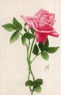 "CPA  ROSE ROSE---TROUVE DANS LOT "" KLEIN, CATHERINA ""  MARQUE AU VERSO ""ECHANTILLON ""---SUPERBE - Klein, Catharina"