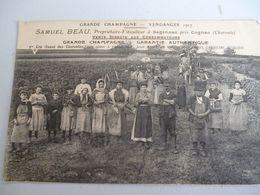 Segonzac  Vendanges Samuel Beau Proprietaire - Autres Communes