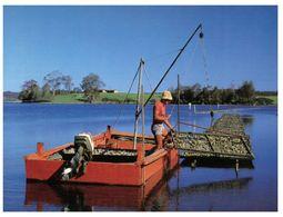 (A 38) Australia - NSW - Narooma Oyster Farming - Altri