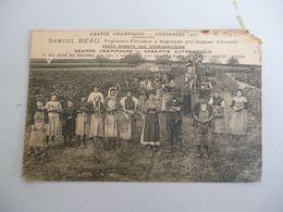 Segonzac Samuel Beau Propriétaire Viticulteur Vendanges 1907 (tel Quel) - Autres Communes