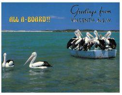 (A 38) Australia - NSW - Ship In Vicentia With Pelican - Altri