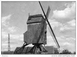 """VRASENE Bij Beveren-Waas (O.Vl.) - Molen/moulin - De Verdwenen Houten """"Ter Biestmolen"""" Kort Voor Zijn Afbraak - Beveren-Waas"""