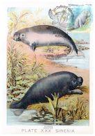 Malaysia Marine Life Definitive 2020 Maxicard Maximum Card Sea Turtle Postmark Dugong Manatee - Malaysia (1964-...)