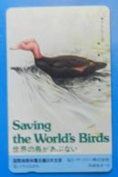 Japan Japon Bird Oiseaux Vogel Birds Save Saving The World's Birds Duck - Oiseaux