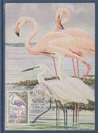 Année Européenne De La Nature Le Flamant Rose Carte 1er Jour N°1634 Paris 21 Mars 1970 - Cartas Máxima