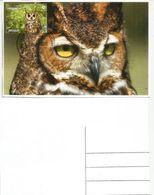 Long-eared Owl,  Kazakhstan.  Maxi-card - Kasachstan