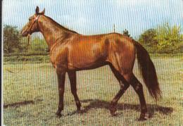 88545- PUREBRED ENGLISH HORSE, MAMMALS, ANIMALS - Paarden