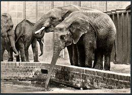 A3979 - Elefant Afrikanischer - Bild Und Heimat Reichenbach - Elefantes