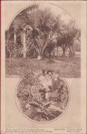 Le Jardin D'essai De Proeftuin Missionaris Kisantu Belgisch Congo Belge CPA Kwango Mission Missie Jesuites CPA - Congo Belge - Autres