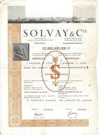 Titre Ancien - Société Anonyme  Solvay Et Compagnie - Titre De 1982 - - Industrie