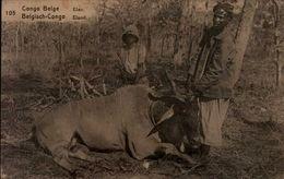 CONGO BELGE..ELAN.....CPA ANIMEE - Congo Belge - Autres
