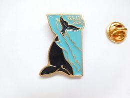 Beau Pin's En Relief , Baleine , Baja Sur California , USA - Animals