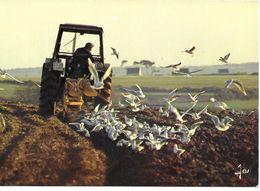 Agriculture Temps Des Labour Et Vol De Goélands - Tractores