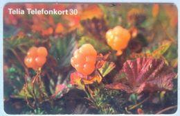 30 Units Fruit - Suède
