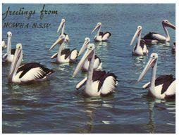 (B 5) Australia - NSW - Nowra And Pelicans - Altri