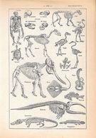 Squelettes. Stampa 1954 - Vieux Papiers