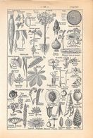 Plante. Stampa 1954 - Vieux Papiers
