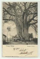 CONGO BELGE - BAOBAB A BOMA 1903  VIAGGIATA FP - Congo Belge - Autres