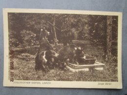 CPA  Allemagne Saxe LEIPZIG  - Zoologischer  Garten  Junge Bären - Parc Zoologique ,zoo , Le Repas Des Ours   1938 - Leipzig