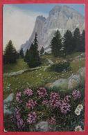 PAYSAGE DE MONTAGNE - DRYAS OCTOPETALA - Alpenflora Fleur Des Alpes - Flores, Plantas & Arboles