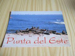 Punta Del Este (Uruguay).Lobos Island. - Uruguay