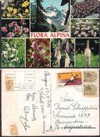 Italia - Cartolina Postale - Flore Alpine - 1970 - Circulee - Cygnus - Flores