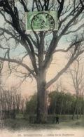 Arbre - Bonsecours - Chêne De La Duchesse - Carte Dos Simple Colorisée N° 52 - Árboles