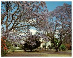 (B 6) Australia - NSW - Grafton Jacaranda Trees - Altri