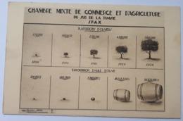 350 SFAX- Plantation D'Oliviers - Chambre Mixte De Commerce Et D'agriculture - Tunesien