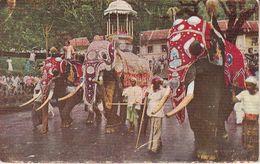 Elefanten, Kandy Perahera, Ceylon Ak153941 - Non Classés