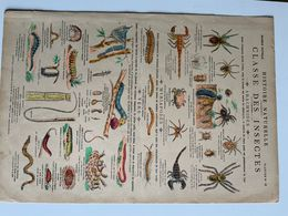 Histoire Naturelle / 3 Planches / Reptiles, Mammiferes, Insectes / Marcel Vagne Pont à Mousson - Vieux Papiers