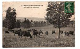 CANTAL UNE VACHERIE AU PATURAGE TRES ANIMEE - Frankreich