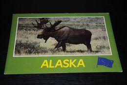 16718-               ALASKA, ALASKAN MOOSE - Non Classés