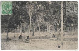 Malaysia (Malacca) – Rubber Estate – Penang – Year 1922 - Malaysia