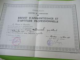 Diplôme Agricole/ Brevet D'Apprentissage /Ecole D'Agriculture De NERMONT/Châteaudun/ E & L/JP DUVAL/ 1961  DIP229 - Diploma & School Reports
