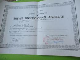 Diplôme Agricole/ Brevet Professionnel Agricole/ CERCA ANGERS/Mention Assez Bien /JP DUVAL/ 1965  DIP228 - Diploma & School Reports