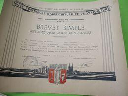Université Catholique De L'Ouest/ Ecole Supérieure D'Agriculture Et De Viticulture/Brevet Simple /JP DUVAL/ 1964 DIP220 - Diploma & School Reports