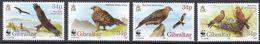 Tr_ Gibraltar 1996 - Mi.Nr. 774 - 777 - Postfrisch MNH - Tiere Animals Vögel Birds WWF - Adler & Greifvögel
