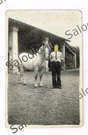Cavallo Horse - Fotografia Originale - Fotos