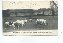 La Vallée De La Lasne - En Prairie Et Sapinières Du Glain  ( Rixensart ) - Rixensart